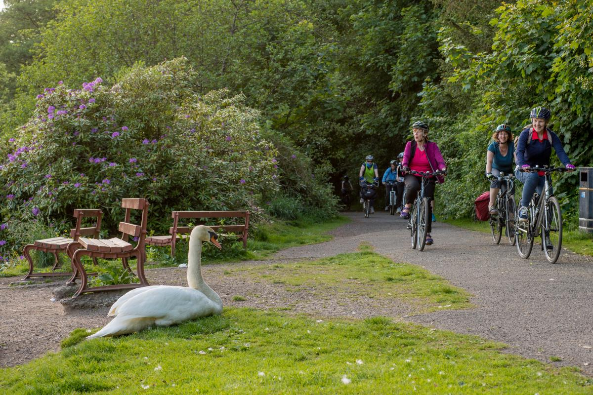 cyclists on path and swan on ground